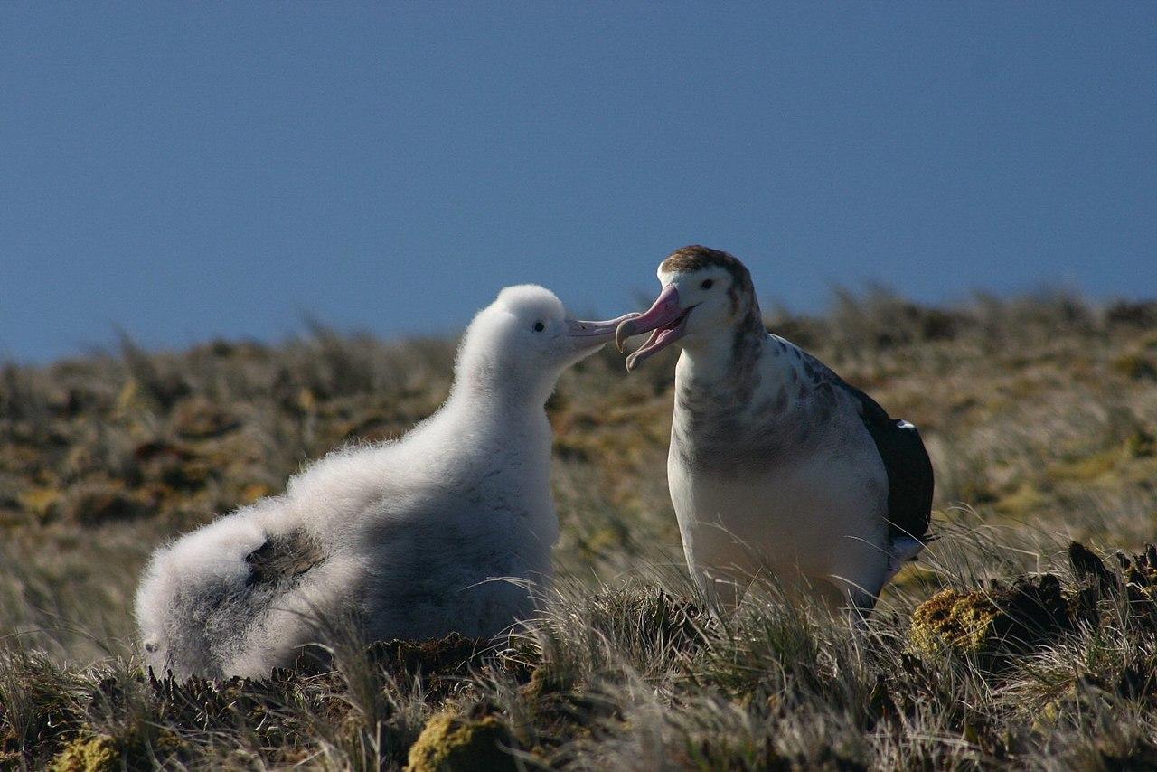 Albatros damsterdam