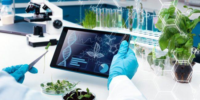 Советом ЕЭК утверждена технологическая платформа эфиромасличных и лекарственных растений