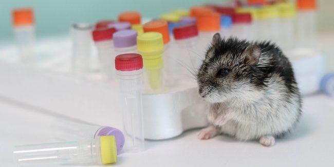 В ЕАЭС гармонизировали требования к проведению оценки безопасности лекарств