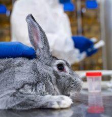European Pharmacopoeia to put an end to the rabbit pyrogen test