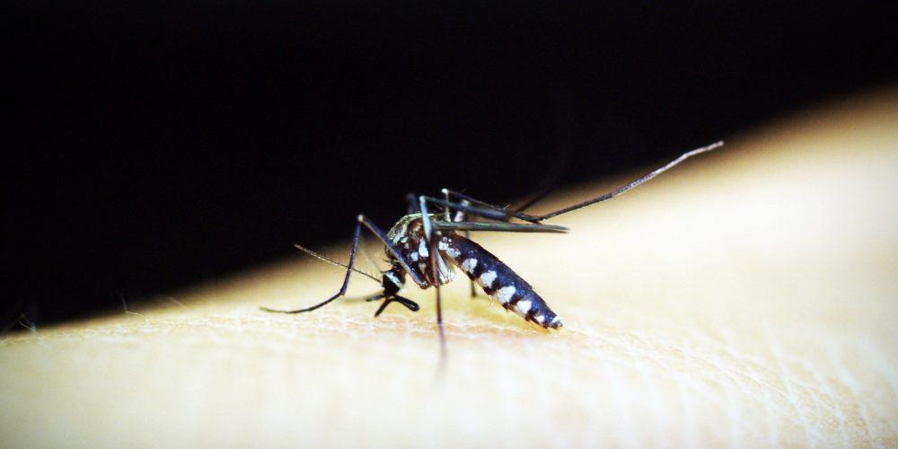 Зарегистрирован первый российский ПЦР-тест для диагностики малярии