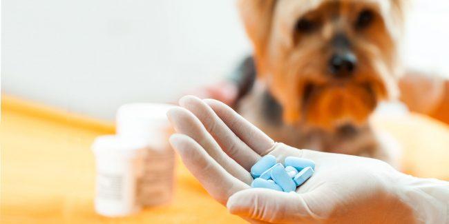 Минсельхоз поддержал предложение депутатов о лечении животных лекарствами для людей